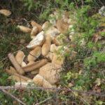 Il pane gettato nei boschi chiantigiani per alimentare gli animali